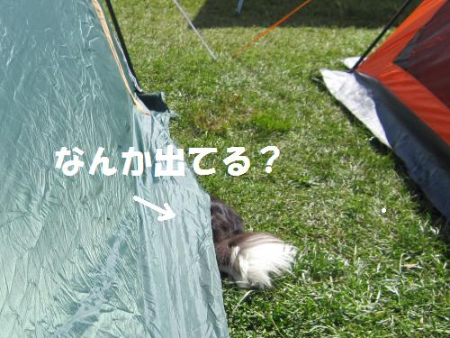 IMG_5032_convert_20111016210425.jpg
