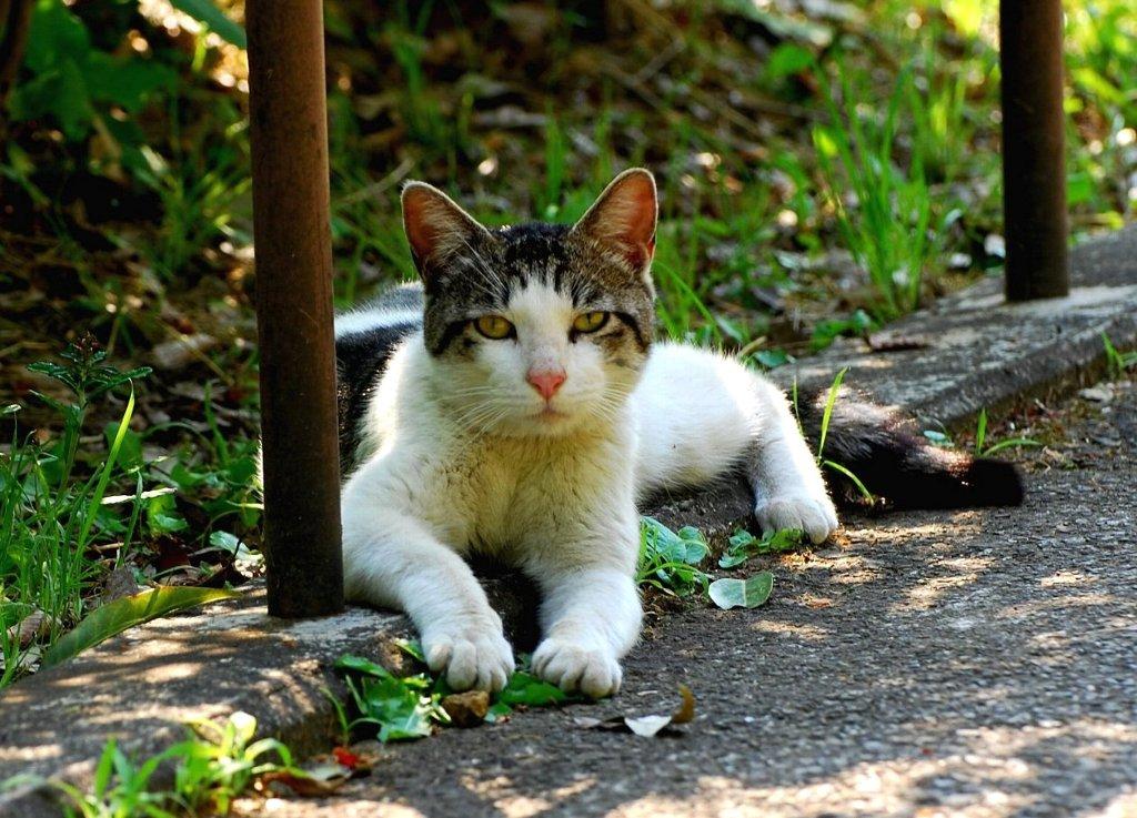 Cat-002.jpg