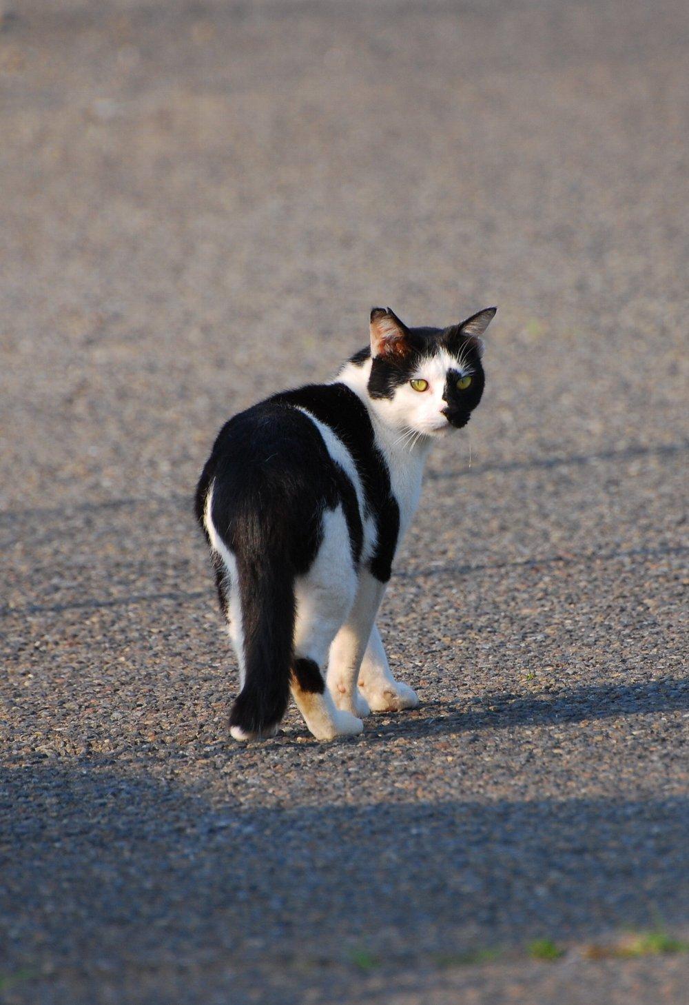 Cat-003.jpg