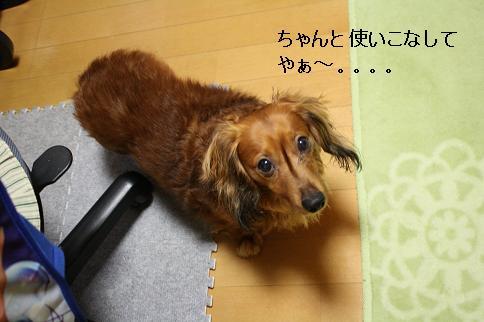 20110518pe.jpg