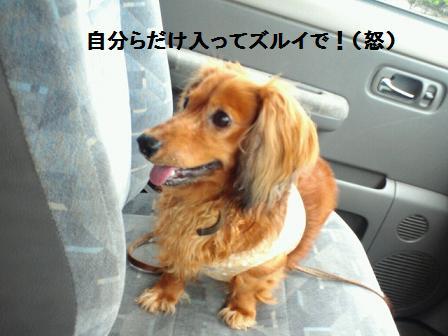 20110703pu5.jpg