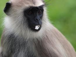 2010スリランカ猿3
