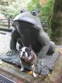 河鹿蛙さんと