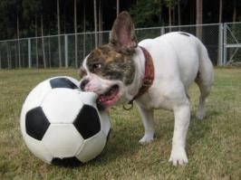 サッカーフレディ