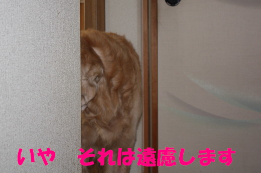 bu-75010001.jpg