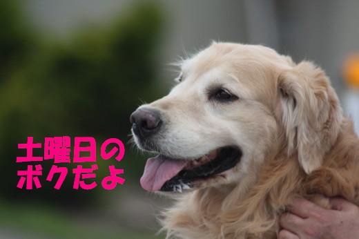 bu-75300001.jpg
