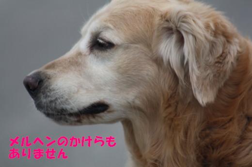 bu-75330001.jpg