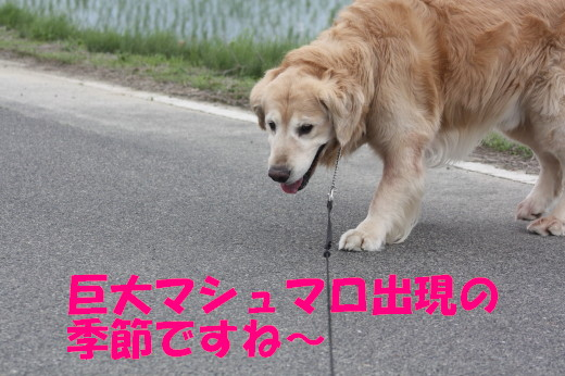 bu-75550001.jpg
