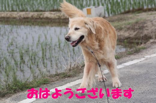 bu-75980001.jpg