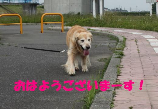 bu-76190001.jpg