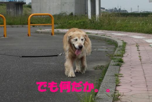 bu-76210001.jpg