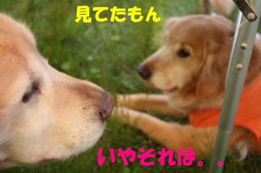 bu-76580001.jpg