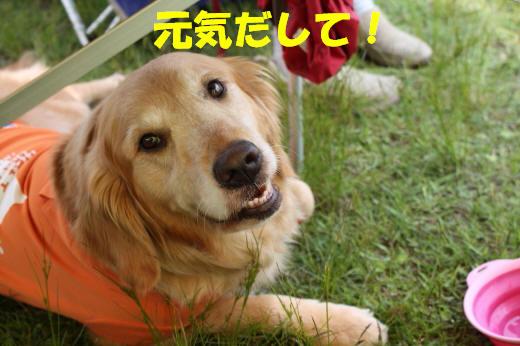 bu-76670001.jpg