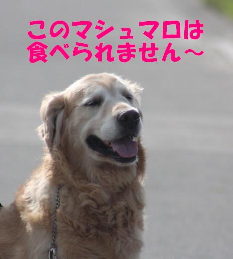 bu-77170001.jpg