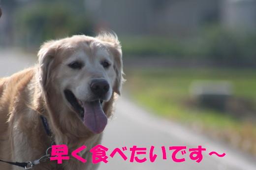 bu-77660001.jpg
