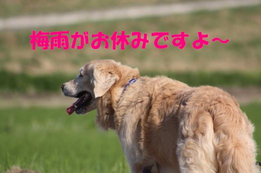 bu-77680001.jpg