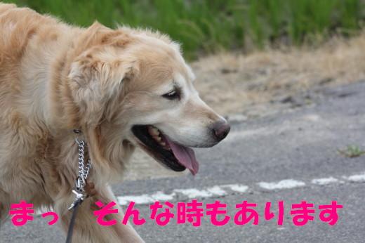 bu-77810001.jpg