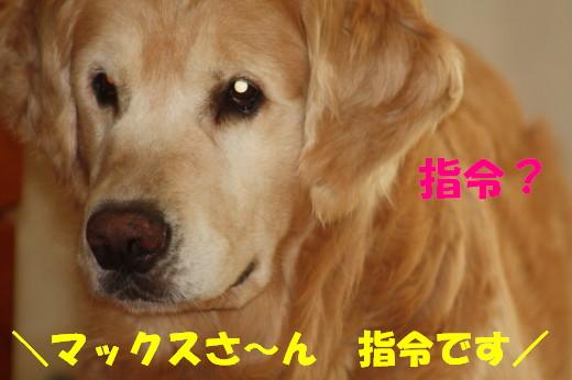 bu-78240001.jpg