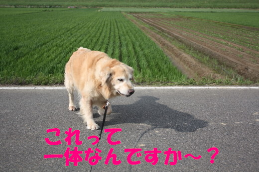bu-78580001.jpg