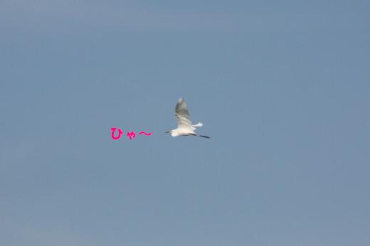 bu-78590001.jpg