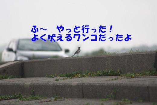 bu-78940001a.jpg