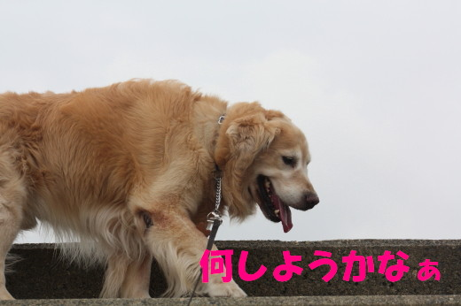 bu-78960001.jpg