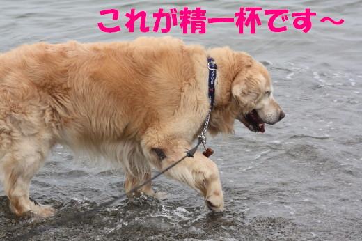 bu-79360001.jpg