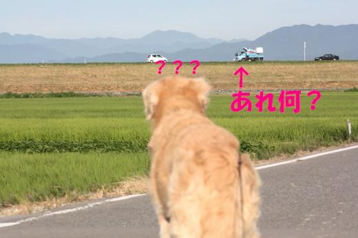 bu-79680001.jpg