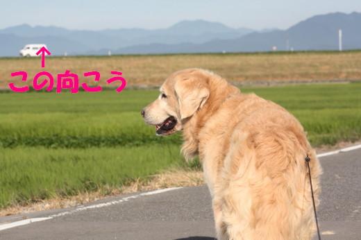 bu-80060001.jpg