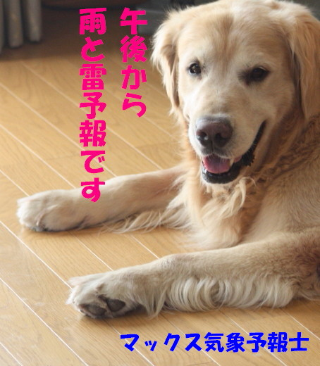bu-80310001.jpg