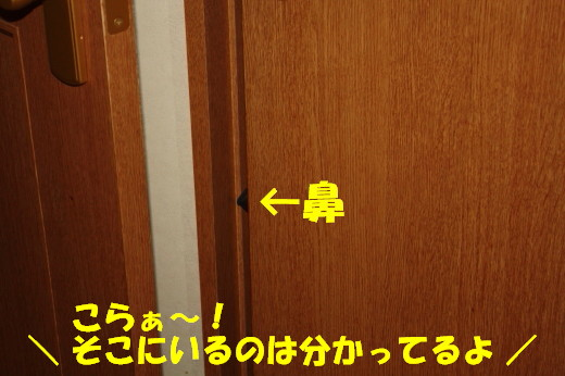 bu-80330001.jpg