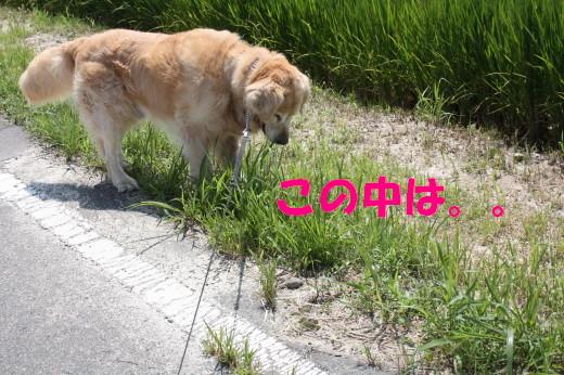 bu-80470001.jpg