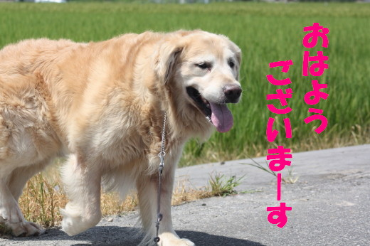 bu-80760001.jpg