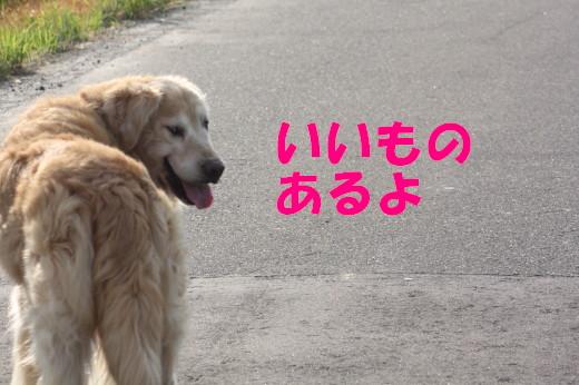 bu-81000001.jpg