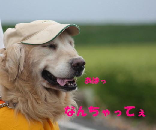 bu-81230001.jpg