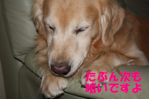 bu-81500001.jpg