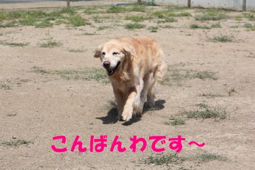 bu-81850001.jpg