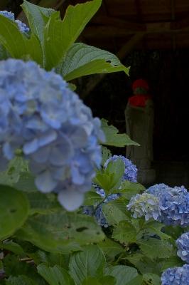 お地蔵さまと紫陽花