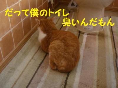 続報 2 トイレ