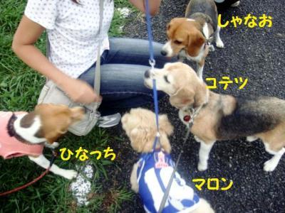 ブログ犬 2 おやつ~