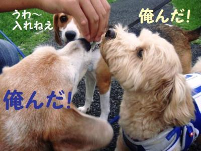ブログ犬 4 おやつ命