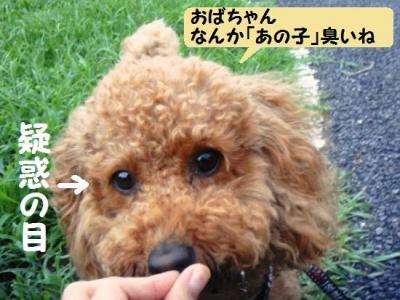 ブログ犬 5 こっそり