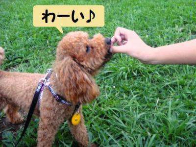 ブログ犬 6 ベリーさんこっそり