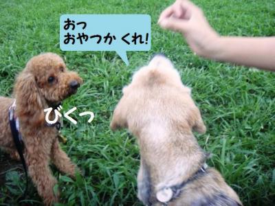 ブログ犬 7 コテツさん乱入