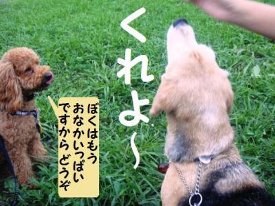 ブログ犬 8 遠慮