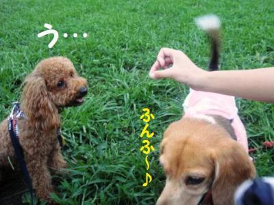 ブログ犬 9 ひなっち乱入