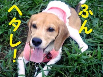 ブログ犬 11 ヘタレ