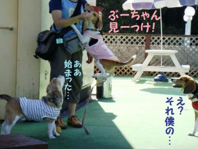 2日目チャト 5 ぶーちゃん見っけ!