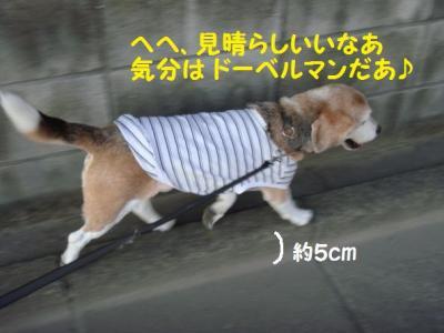 歩く 6 大型犬