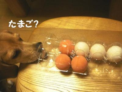 卵 1 ゲンママ ありがとう